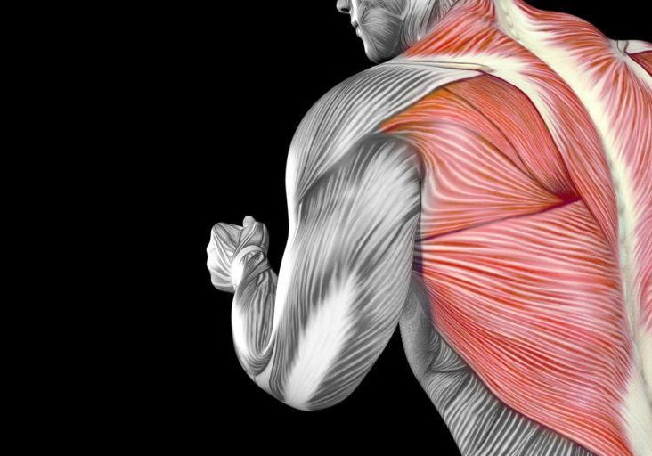 Human Male Body Anatomy Concept Illustration with visible Muscles
